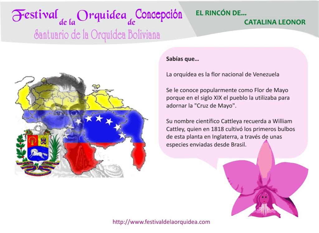 catalina15