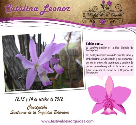 catalina20