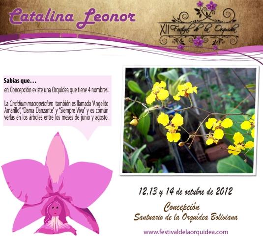catalina22